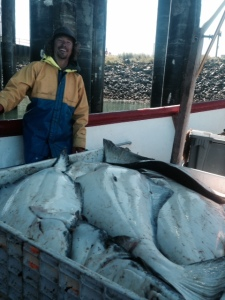 This year's halibut ready to offload.